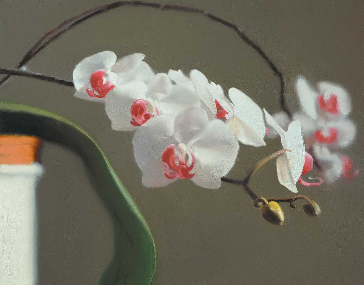 Orchid . 1997
