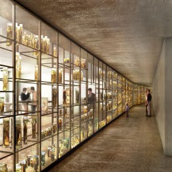 Harry Gugger Studio . Natural History Museum and City Archive . Basel (3)