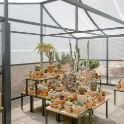 Part . Cactus Store Greenhouse . NEW YORK (11)
