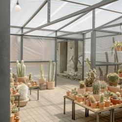 Part . Cactus Store Greenhouse . NEW YORK (12)