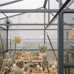 Part . Cactus Store Greenhouse . NEW YORK (14)