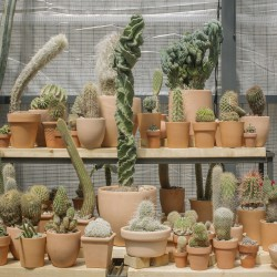 Part . Cactus Store Greenhouse . NEW YORK (15)