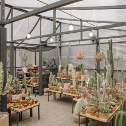 Part . Cactus Store Greenhouse . NEW YORK (9)