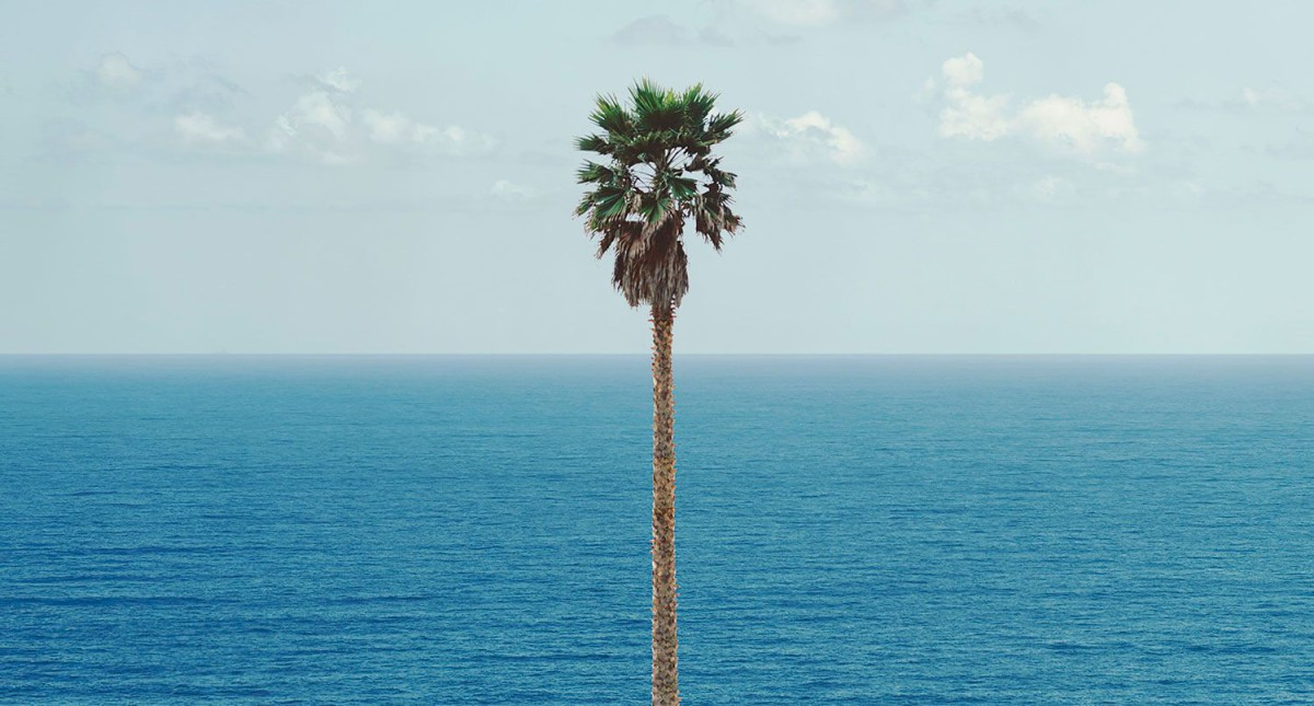 Palm tree/Seascape . 2010